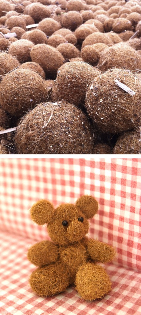 Peluche / Teddy / Teddy