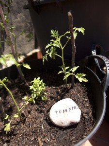 Plantar / Plant / Pflanzen