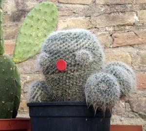 cactus / cactus / Kaktus