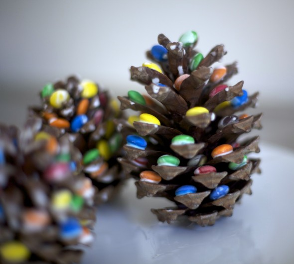 Piñas / Pine cone / Tannenzapfen