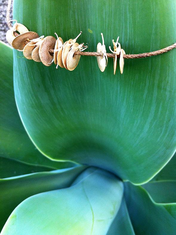 Plantas / Plants / Pflanzen