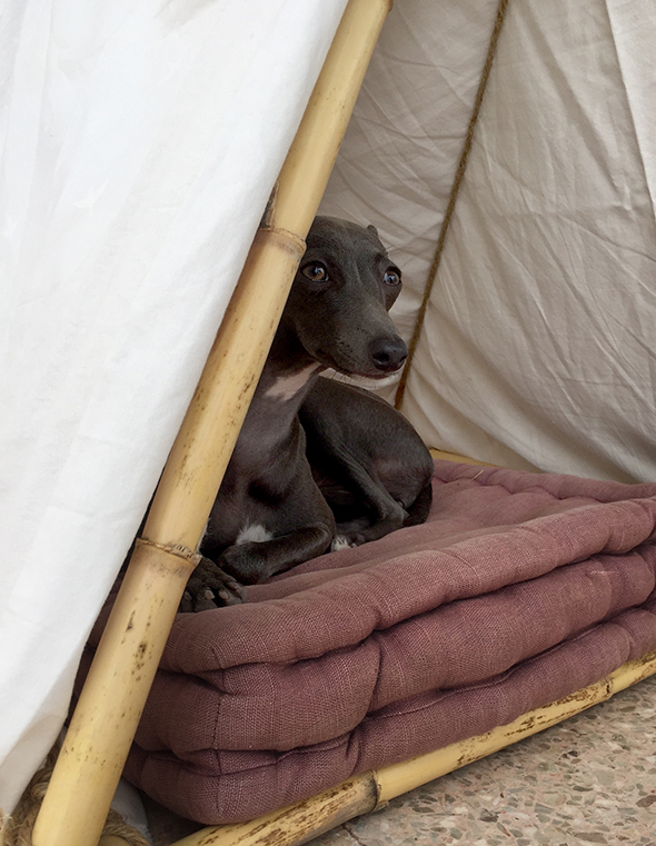 hundehütte casita de perro dog house bamboo bambu selfmade basteln hund dog haus house casa perro 2