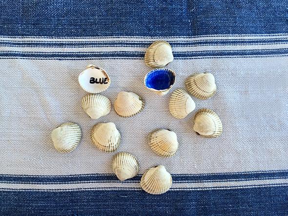 shells muscheln memory spiel juego aprender game idiomas languages sprachen spielen